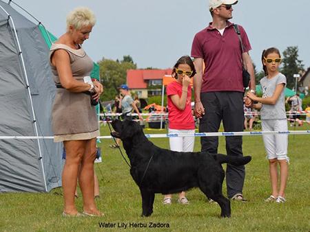 International Dog Show in Sopot 21.08.2016 - open class, 1st, CWC, Cacib, Best Female, BOB, BOG III