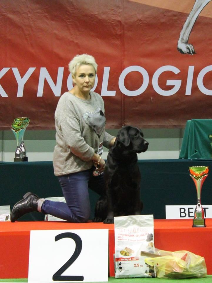 International Dog Show in Kielce 12-13.11.2016 - open class, 2 x 1st, 2 x CAC, 2 x Cacib, 2 x Best Female, BOS, BOB, BOG II