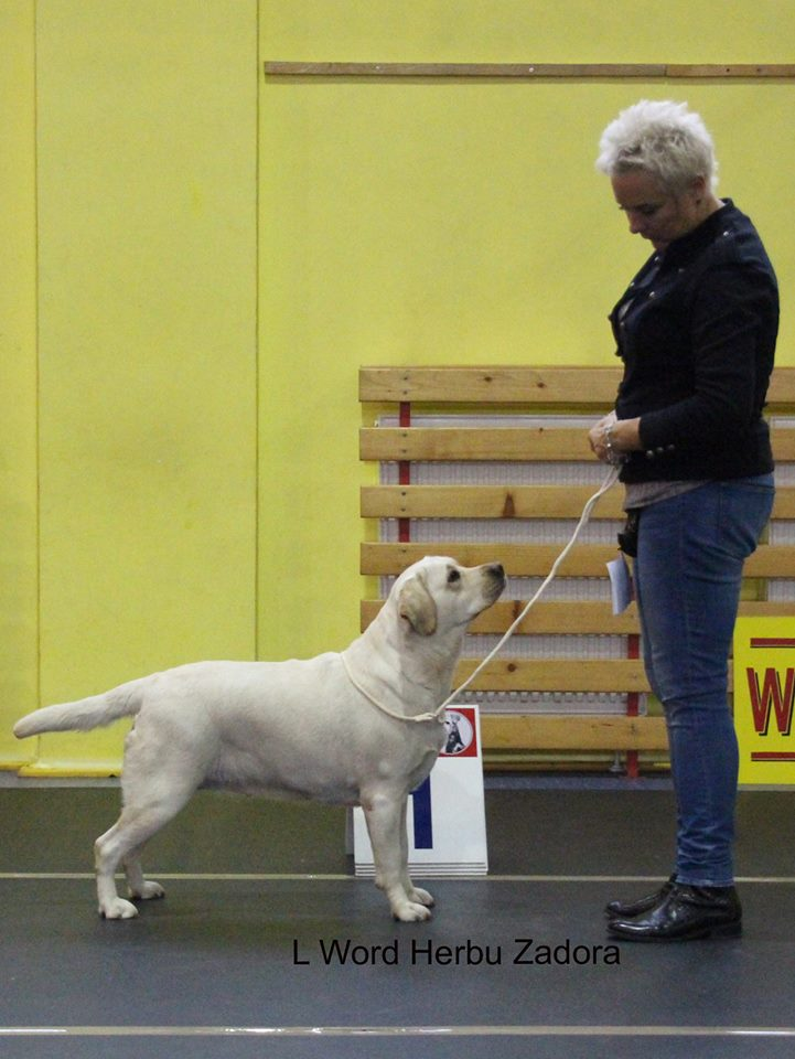 National Dog Show in Choceń 15.10.2016 - champion class, 1st, CAC