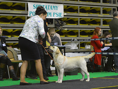 National Dog Show in Gdynia 08.01.2017 - open class, 1st, CAC, Best Female, BOB