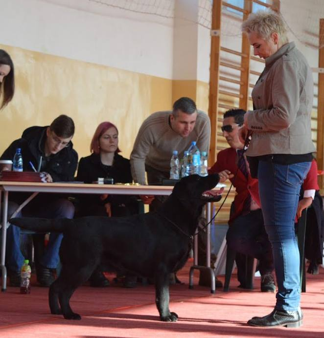 Valentine Dog Show in Bydgoszcz 11-12.02.2017 - junior class, 3rd, excellent