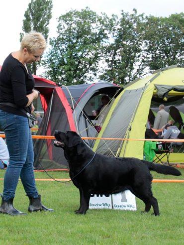 National Dog Show in Gorzów Wielkopolski 02.07.2017 - open class, 1st, CAC, Best Female, BOB = Polish Champion
