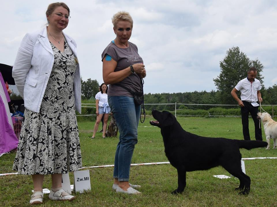 International Dog Show in Warsaw 08.07.2017 - junior class, 1st, Junior Winner, BOB Junior = Polish Junior Champion