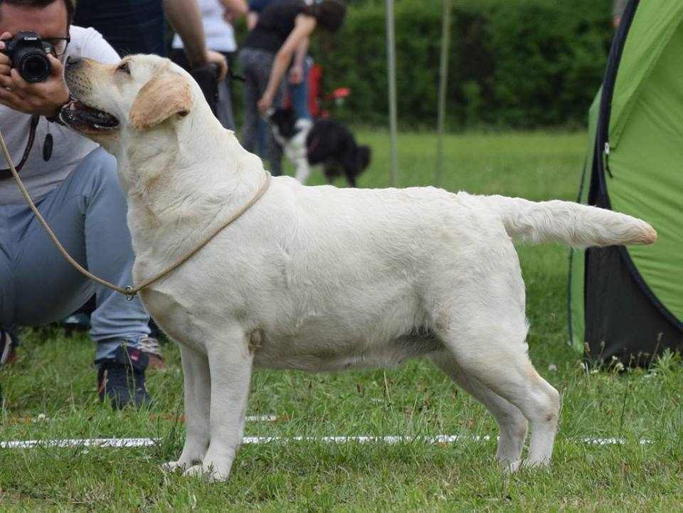 International Dog Show in Warsaw 08.07.2017 - champion class, 3rd, excellent