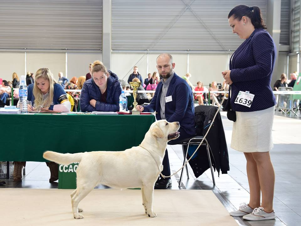 International Dog Show in Poznań 2017 - junior class, excellent, 4th
