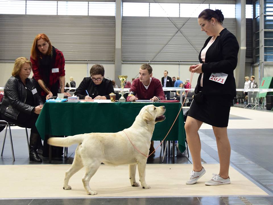 International Dog Show in Poznań 2017 - junior class, excellent, 3rd