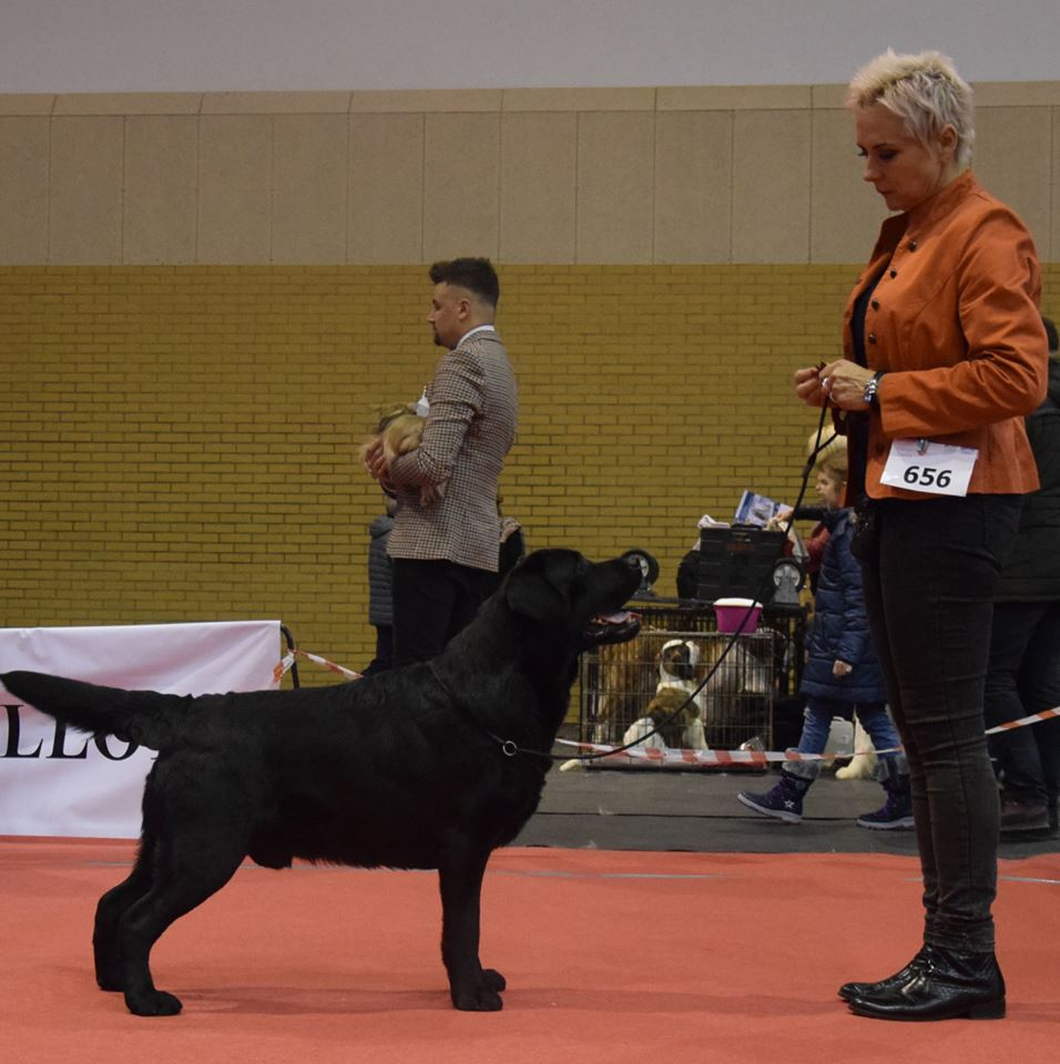 National Dog Show in Brodnica 14.01.2018 - open class, 1st, CAC, Best Male, BOB, BOG
