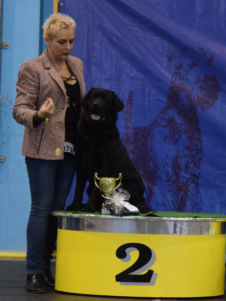 National Dog Show in Choceń 11.03.2018 - open class, 1st, CAC, Best Male, BOB, BOG II