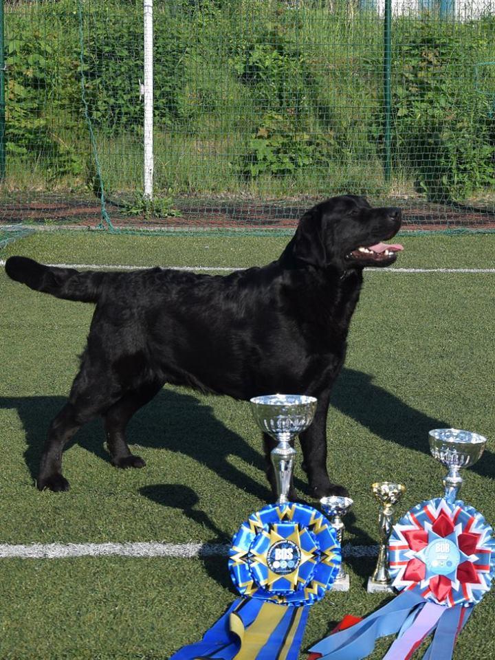 International Dog Show in Łódź 13.05.2018 - junior class, 1st, Junior Winner, BOB Junior, BOS