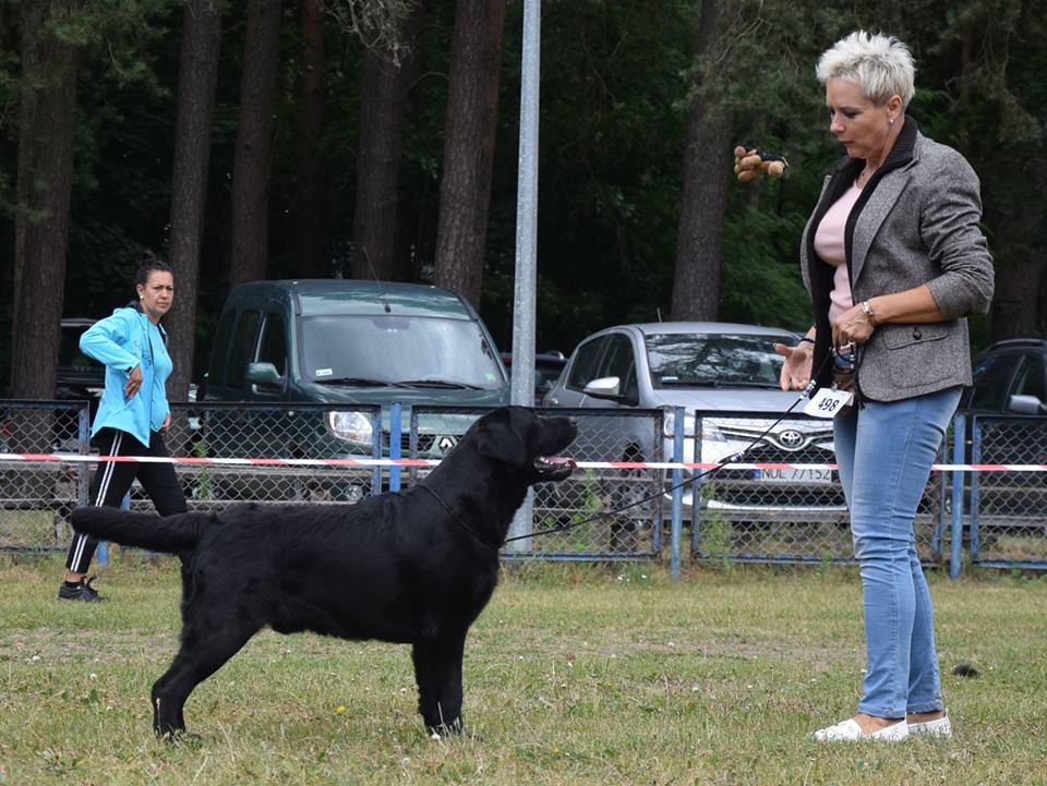 National Dog Show in Szczytno 24.06.2018 - junior class, 1st, Junior WInner, BOB Junior = Polish Junior Champion