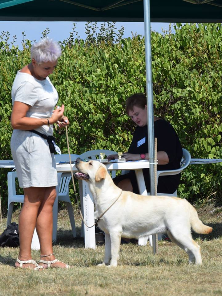 International Dog Show in Sopot 04.08.2018 - intermediate class, 1st, CAC