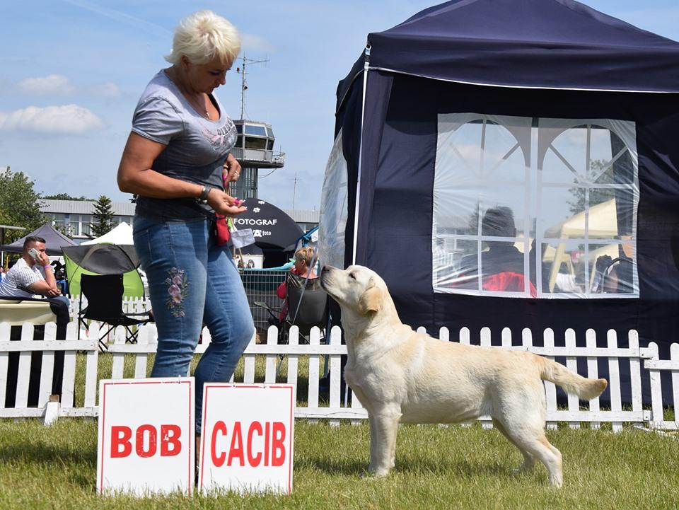 International Dog Show in Leszno 26.05.2019