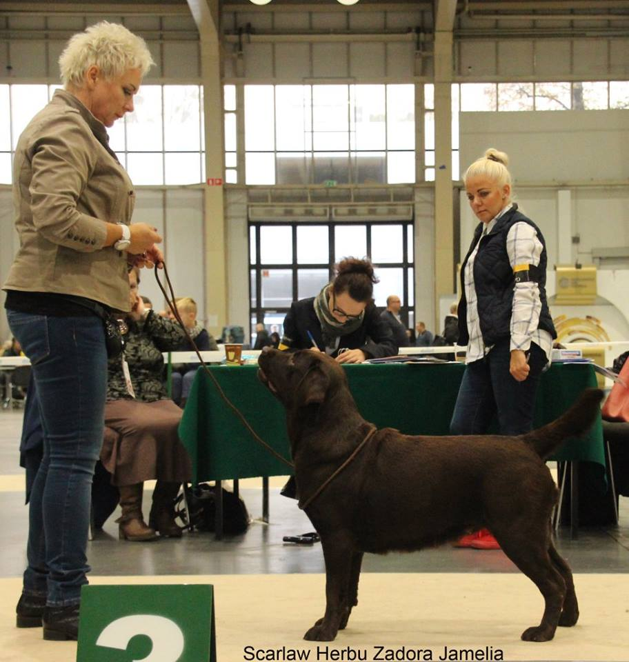 International Dog Show in Poznań 30.10.2016 - open class, 1st, CAC