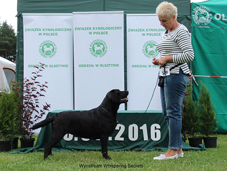 National Dog Show in Olsztyn 03.07.2016 - open class, 1st, CAC, Best Female, BOB