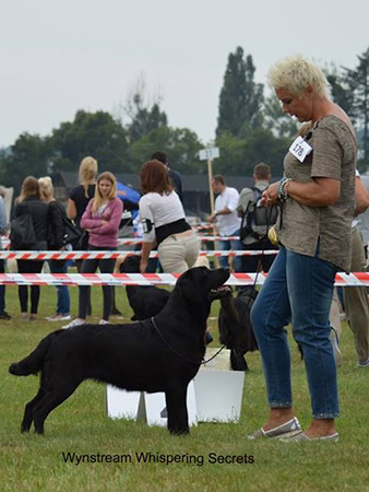 Retriever Club Show in Sopot 21.08.2016 - open class, 2nd, excellent
