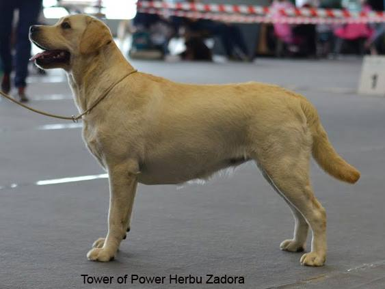 International Dog Show in Kraków 18.06.2016 - intermediate class, 3rd, excellent