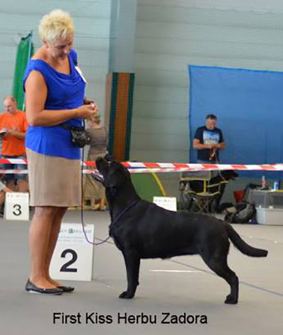 International Dog Show in Kraków 18.06.2016 - junior class, 2nd, excellent