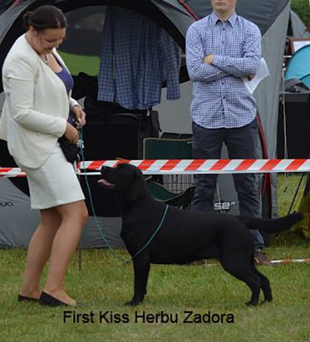 International Dog Show in Sopot 20.08.2016 - junior class, 2nd, excellent