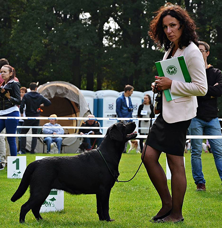 International Dog Show in Wrocław 24.09.2016 - junior class, 1st, Junior Winner, BOB Junior, BOS