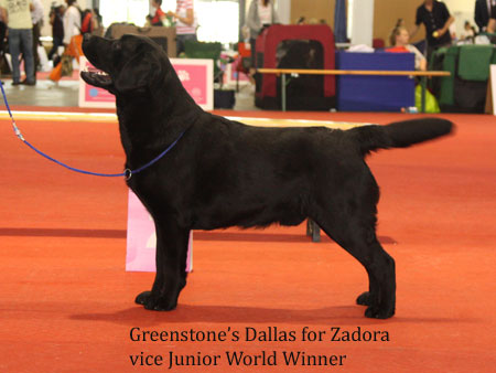 Ch. Greenstone's Dallas At Zadora